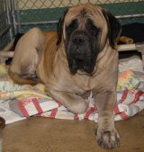 160 pound Lapdog Needs New Home