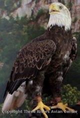 """Wings of Wonder - Birds of Prey"" program featured at 14 West Virginia State Parks in 2016"