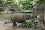 Biology professor part of international research team studying Sumatran rhinos