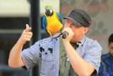 Shane Thomas Entertains at Pullman Square