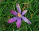 IMAGE GALLERY: Flowers Blooming