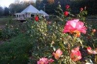 Rose Garden Giveaway Scheduled