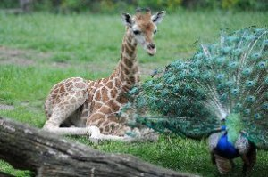 Bronx Zoo photos by Julie Larsen Maher/WCS