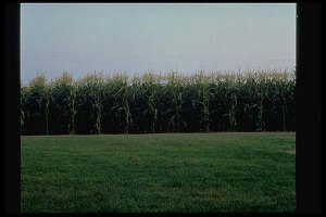 "The original field from ""Field of Dreams"" starring Kevin Costner, who just won Best Actor for the Hatfields & McCoys TV mini series. ""Field of Dreams"" is available on DVD."