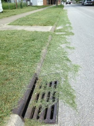 $500 Huntington Fine for Sweeping Cut Grass, Leaves  into Sewer