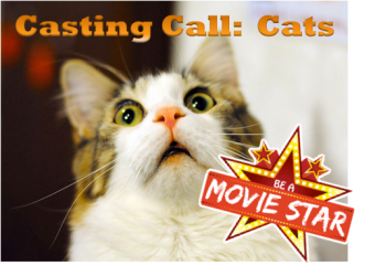 Casting Call for Cats in an Indie Movie