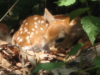 DNR Warns: Leave young wildlife alone