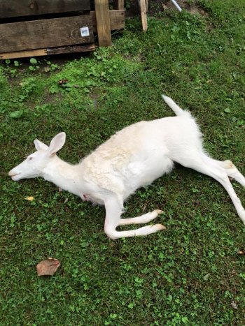 Facebook users help WV Natural Resources Police solve albino deer killing case in Boone County