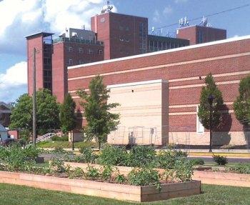 Marshall University, GroHuntington to host yoga in the garden
