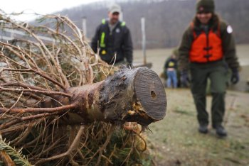 WVDNR uses Christmas trees to create, improve fish habitat at popular fishing locations