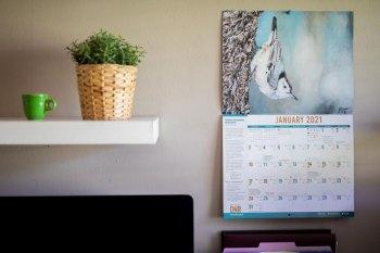 WVDNR Seeks Wildlife Paintings for 2022 Calendar