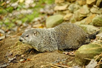 Celebrate Groundhog Day at the West Virginia Wildlife Center Feb. 2