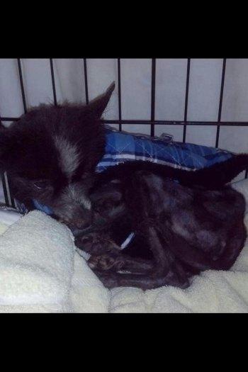 Altizer Found Dog Needs Home