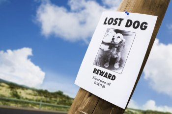 10 Things to Do if Your Pet is Lost