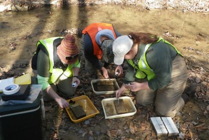 Field work gives Marshall University students working with Dr. Mindy Armstead valuable hands-on opportunities to study stream ecology and the effects humans have on those ecosystems.
